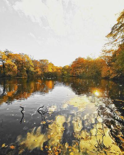 Sherdley Park UK Sherdley Park Water Lake Pixelated Reflection Sky