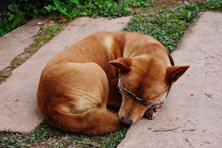The eyeglasses dog. Mammal Animal Themes Pets Dog Domestic Animals One Animal No People Day Outdoors Nature
