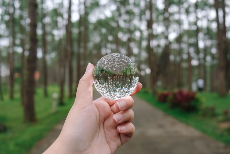 Cropped hand of person holding crystal ball against trees