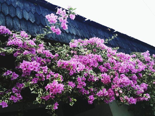 Flower Garden Flower Porn Bunga Kertas Home Sweet Home ♥