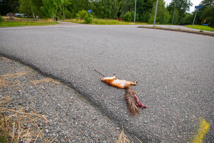 High angle view of insect on road