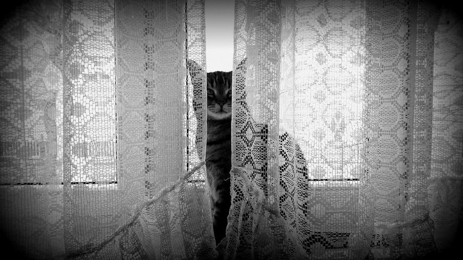 Made by Sony Xperia XZ Cat Tom-cat Window Curtain Curtains No People Day Indoors