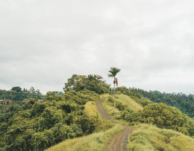 Tree Plant Green Color Sky Environment Beauty In Nature Landscape Nature Growth Land Cloud - Sky Tranquil Scene Tranquility Scenics - Nature Day Grass Outdoors Way Path Direction Bali