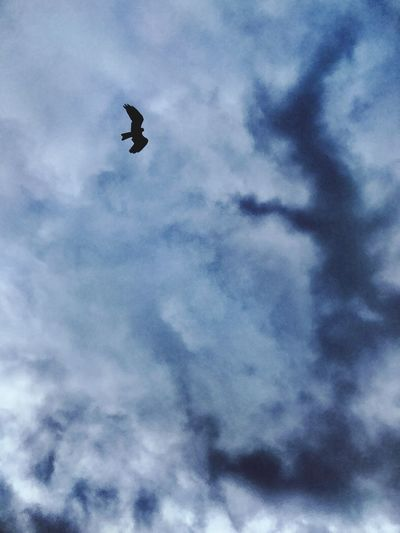 Live For The Story Skywatcher Soaring Up Above Topoftheworld Flying Low Angle View Cloud - Sky Sky Bird Mid-air Animal Themes Animals In The Wild One Animal Spread Wings No People Outdoors Nature Day Animal Wildlife Beauty In Nature Bird Of Prey