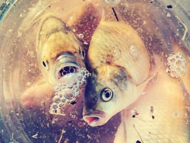 Fish art ...
