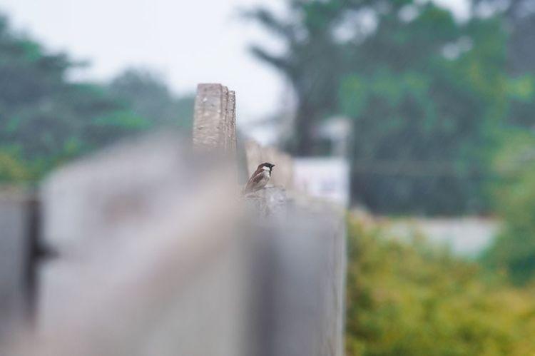 the bird #EyeEm #eyembestshot #The Week On EyeEm #EyeEm Nature Lover EyeEmBestPics EyeEm Best Shots EyeEm Nature Lover EyeEmSelect The Week on EyeEm Eyeemgallery EyeEm Selects EyeEm Gallery Eyeemphotography Bird Photography Bird Perching Animal Themes Close-up