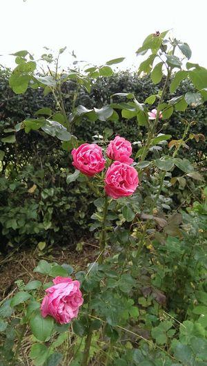 Flower/Blumen im Garten der Ferienwohnungen