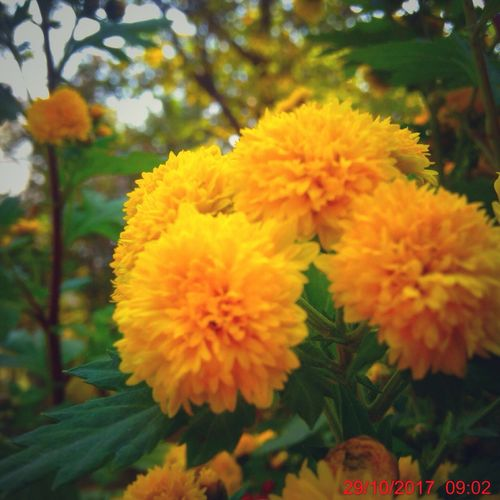 -This evening will never come again !' Flower Beauty In Nature Growth Fragility Nature Freshness Close-up Flower Head No People Petal Plant Outdoors Yellow Day Blooming Autumnbliss EyeEmNewHere