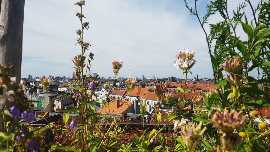 Garden Flowers Rooftop Sunshine Bestviewofberlin Good Times TV Tower View Berlin Photography Berlinstagram