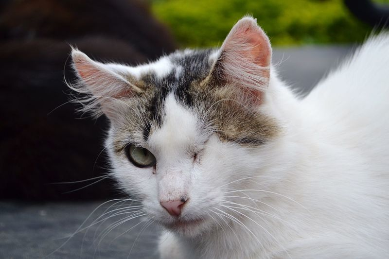 One eye cat Adopt To Save A Life EyeEm Selects Animal Themes Pets Domestic Domestic Animals Animal One Animal Mammal Feline Cat Domestic Cat Vertebrate Close-up Whisker Animal Body Part No People Animal Head  Focus On Foreground Relaxation Eyes Closed  Looking
