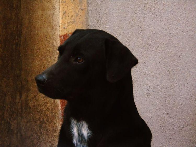 Cãozinho Cachorro Amo❤ amore
