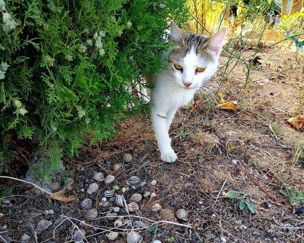 Cat Cats Cat♡ Cat Lovers Snail Snail🐌 Salyangozlar Salyangoz Snail Collection Snailshell Kedi Kedicik Kedi Aşkı Kediseverler Kedicik 🐈
