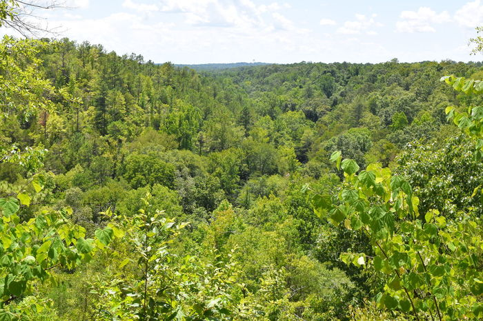 Alabama Alabama Outdoors BBQ Chewacla State Park High Angle View Landscape Nature Outdoor Alabama Scenics Tranquil Scene Water at Auburn, Alabama Outdoor Photography