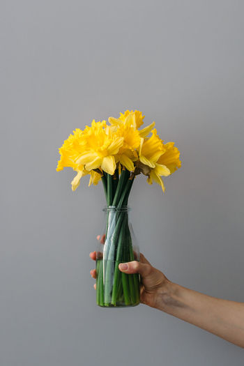 Close-up of hand holding yellow flower over white background