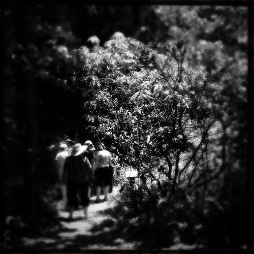 Botanical Tour