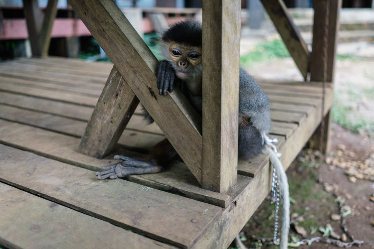 High angle view of monkey sitting on bench