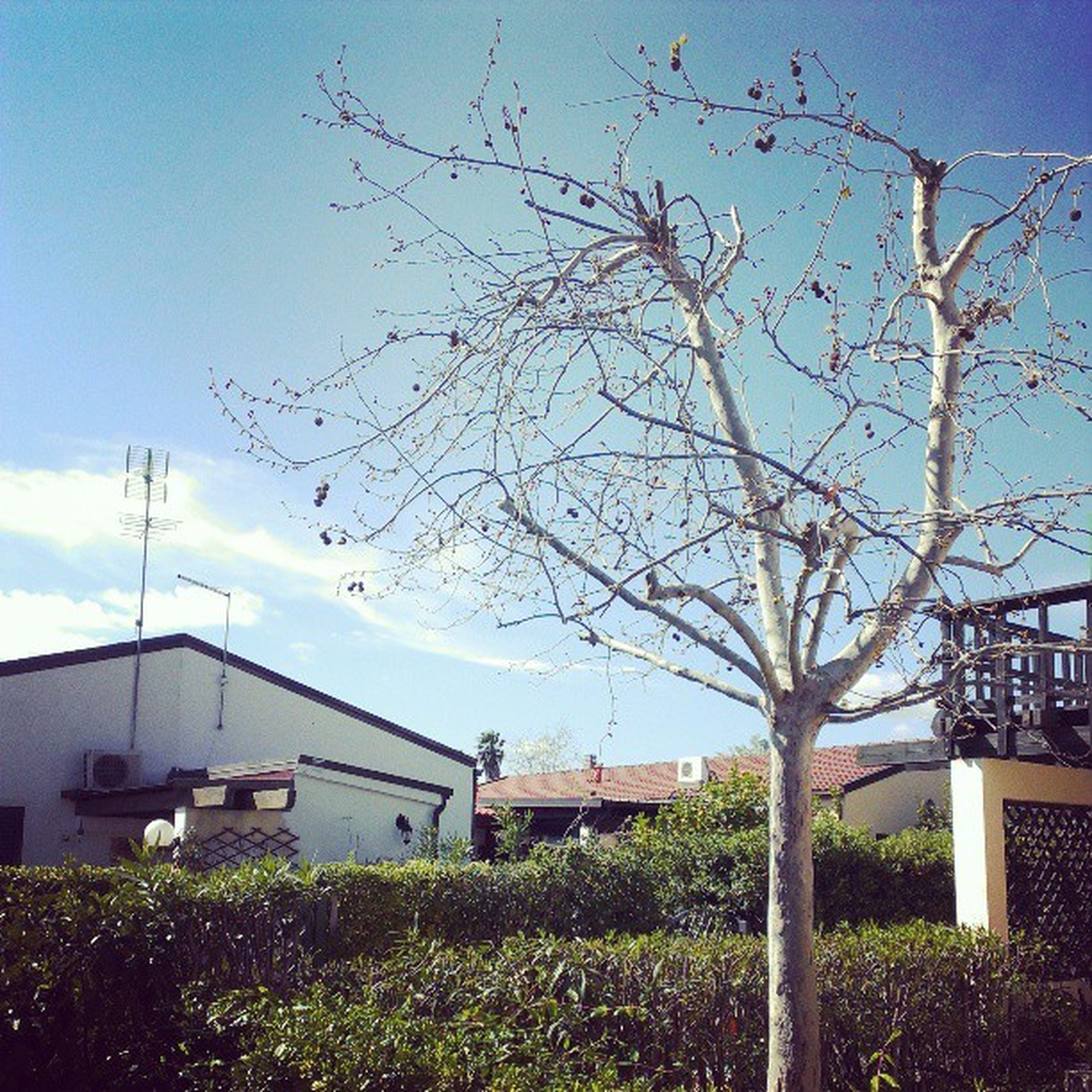 building exterior, built structure, architecture, tree, sky, bare tree, house, branch, residential structure, growth, blue, nature, residential building, sunlight, grass, day, low angle view, outdoors, no people, field