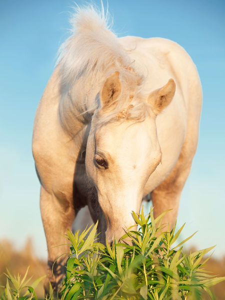 welsh pony foal in pasture. Animal Day Domestic Animals Field Foal Grass Graz Horse Meadow Outdoors Pasture Pony Welsh