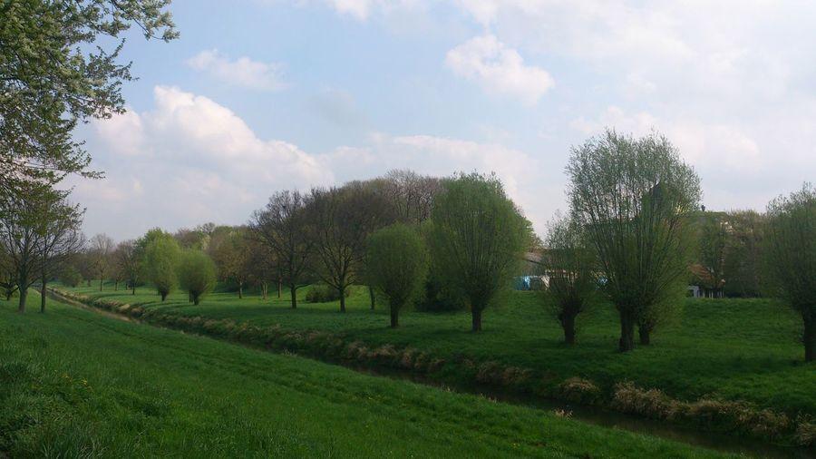 So schön grün!!! Steinhude-am-meer.de - Dein Meer-Foto