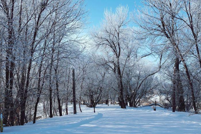 blue on white Snow Winter Trees NoDak Cold Freezing Ice Explore Beautiful Scenery Nature Allday