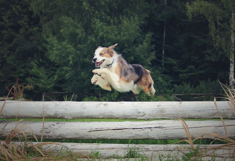 Dog Jumping Over Fence Against Tree