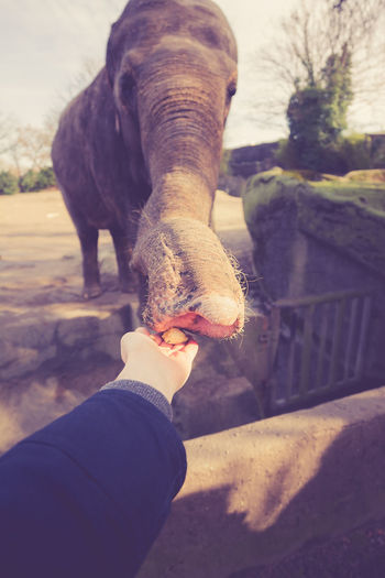Feeding the elephant with a piece of banana by my hand Arm Banana Capture The Moment Ego Elephant Feeding  Hand Trunk Zoo