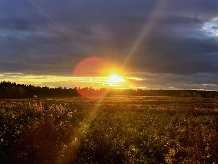 One evening forest walk in October Sunset Sun Field Sunbeam Beauty In Nature Tranquility Scenics Landscape Nature Tranquil Scene Sunlight Lens Flare Sky Idyllic Agriculture No People Outdoors Grass Sunset_collection Sky And Clouds Sky_collection Nature