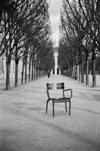 Paris EyeEm Paris Film Photography Tree Plant Seat Park Bench Nature Absence Day The Way Forward Empty No People Outdoors Diminishing Perspective