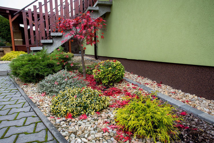 Potted plants on footpath by building