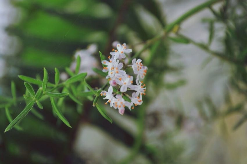 Flower Fragility Beauty In Nature Nature Growth No People Plant Freshness Day Outdoors Flower Head Close-up
