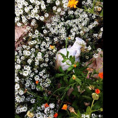 غزة فلسطين صورة صورتي صور_من_غزة تصوير  تصويري  طبيعة Palestine Photographer Instgram