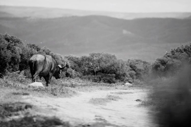 Addo Southafrica Check This Out