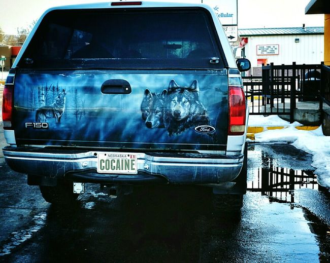 One man wolf pack Hangover Wolfpack Vehicle Truckart Funny On The Road Check This Out Rural America ArtWork Howling At The Moon