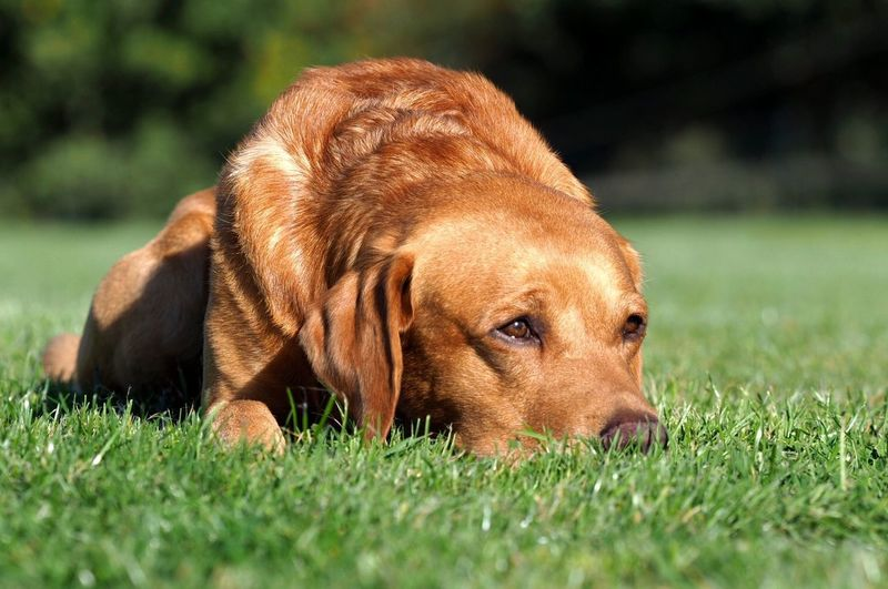 One Animal Canine Dog Grass Animal Themes Animal Pets No People Nature Sunlight Field Day