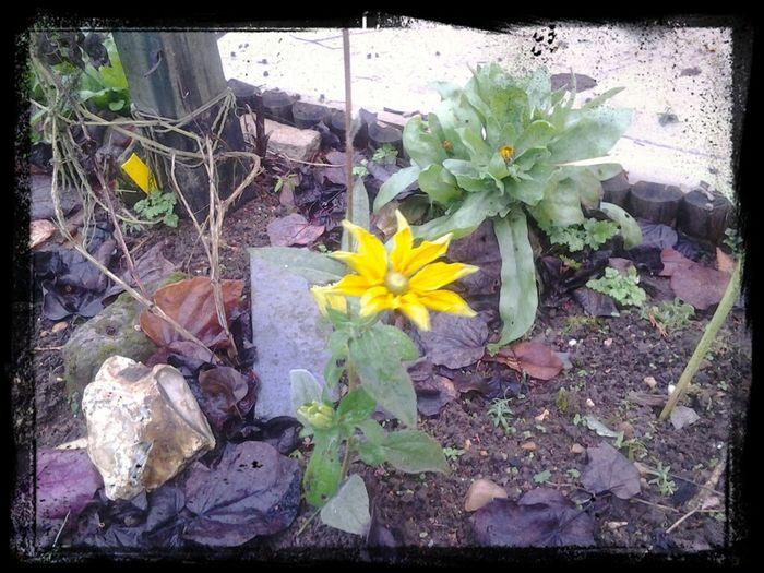 Still blooming, lovely !