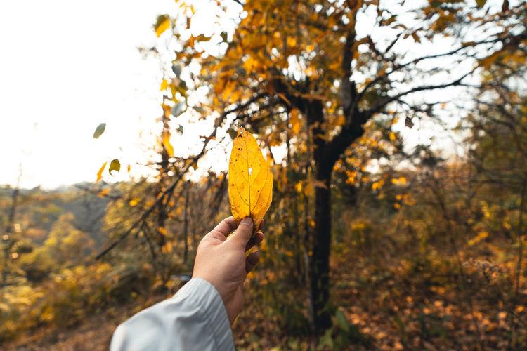 Man holding autumn leaves