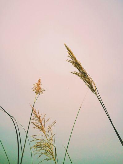Plants growing against sky