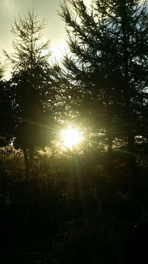 Sunrise. Sunrise Trees Sunrays