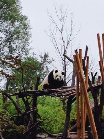 Panda4life 🐼