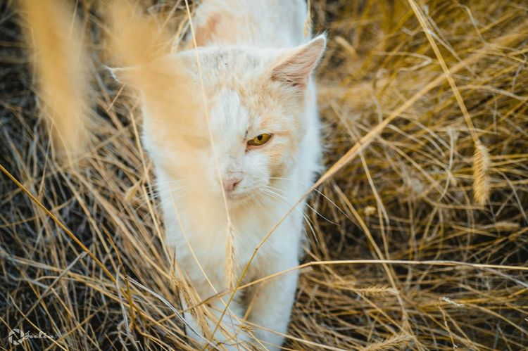 фото Rossia Nikon D3200 Photographer JReshetnyаk Street Photography Man Cat World Photo