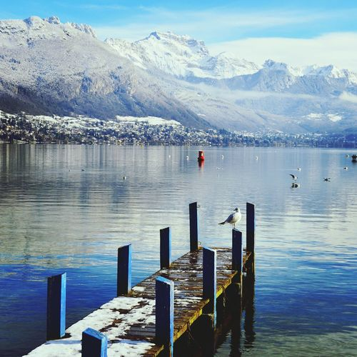 Annecy Lac Moutains Reflection Winter Blue Seagull Jetty
