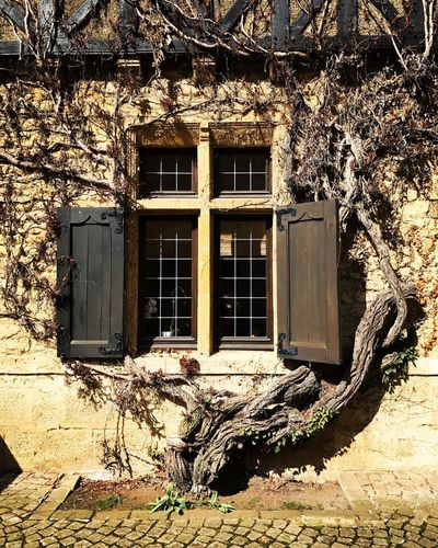 Building Exterior Tree Branch Orval Abbey Texture