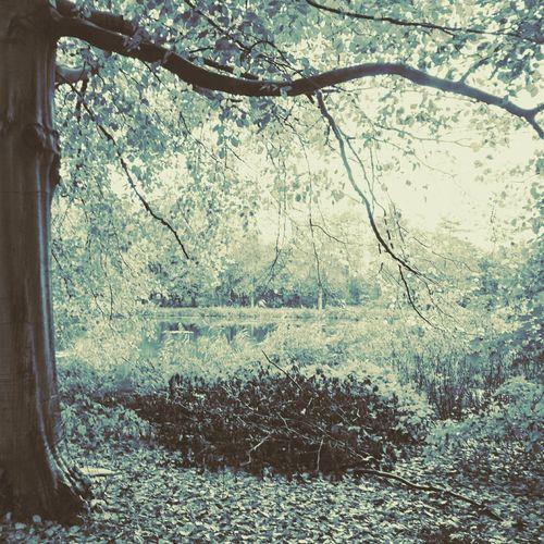 Fringe. Tree No