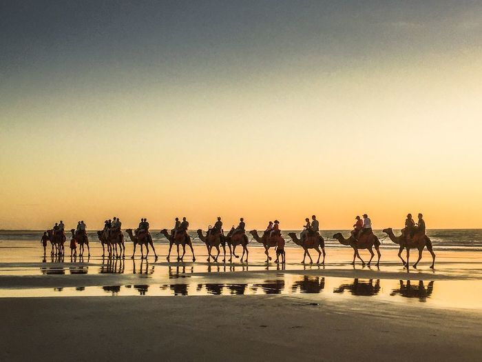 Sunset Camel