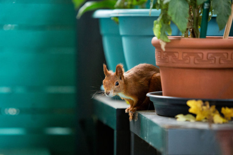 Close-up of squirrel in flower pot