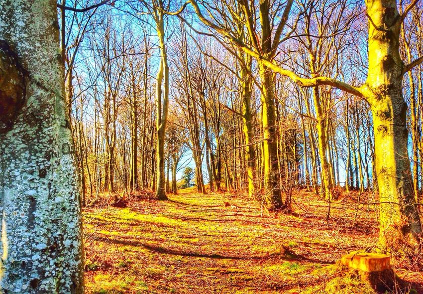 April in the forest. Denmark Enjoying Nature Tadaa Community EyeEm