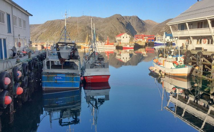 Norway Honningsvag Fish Fishing Fisherman Fishing Boat Nature Nature_collection Reflection Water Reflections Reflection_collection Food City Northennorway Ocean View Ocean Village Fishing Village Harbour Sunny Day Mountain View Hiking Holiday Hiking Adventures Colorful