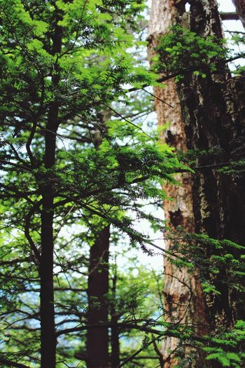 The Catskills Tree Forest Tree Trunk Growth Nature Low Angle View Day No People Green Color Outdoors Beauty In Nature Catskill Mountains Catskills Growth