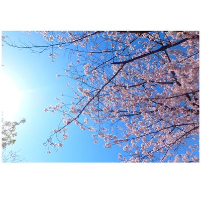 Hello World Taking Photos Check This Out Sky Cherry Blossoms Blue Picture Holiday Spring Favorite 🌸❤️