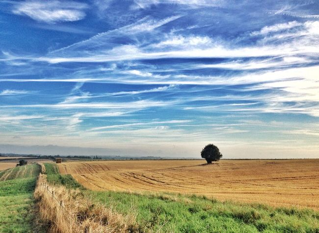 Just One Tree Landscape Beauty In Nature Blue Sky And Clouds Rural Scene Scenics Horizon Over Land Landscape_photography Cloudscape Sky Landscape_Collection Agriculture Summer Views Harvest Time Late Summer Colours Sunshine ☀ Summer Enjoying The View